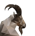 Abstract goat vector image vector image