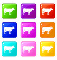 cow icons 9 set vector image