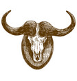 engraving drawing buffalo skull vector image