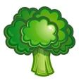 green broccoli Vegetable vector image vector image