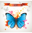 morpho butterfly vector image vector image