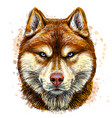 sketchy color portrait siberian husky vector image