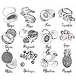 collection of fruits and berries in hand drawn vector image vector image