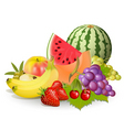 groups fruits vector image vector image