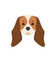 portrait of cavalier king charles spaniel dog vector image