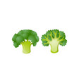 fresh green broccoli icon isolated on white vector image