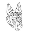 german shepherd male big head ears tongue stick vector image