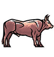 powerful standing bull vector image