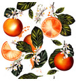 seamless pattern with realistic lemon oranges vector image vector image