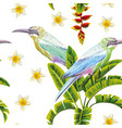 tropical birds flowers and plants white background vector image vector image