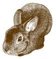 engraving fluffy bunny vector image