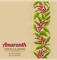 amaranth plant pattern on color background