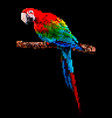 bird pixel art parrot pixel isolated vector image vector image