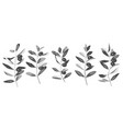 olives and branches hatching vintage set vector image