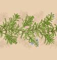 rosemary pattern vector image