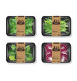 salad leaves with plastic tray container with vector image vector image