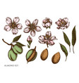 set hand drawn colored almond vector image