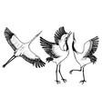 wild birds in flight animals in nature or in the vector image vector image