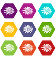 aster flower icons set 9 vector image vector image