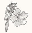 Parrot exotic bird with flower hibiscus vector image