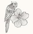 Parrot exotic bird with flower hibiscus vector image vector image