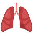 human lung anatomy diagram vector image