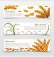 agricultural cereals banners template realistic vector image vector image