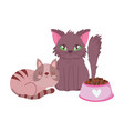 pet shop furry cat and striped kitten with bowl vector image vector image