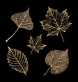 set gold skeleton leaves on black background vector image