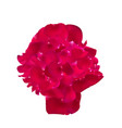 silhouette of a girls head from rose petals vector image
