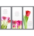 Beautiful Floral Cards with Realistic Tulip vector image