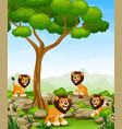 cartoon lions group in the jungle vector image vector image
