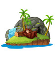 monkey on the island vector image vector image