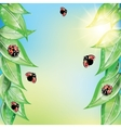 Red ladybugs on the green leaves vector image