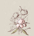 card sketches peonies bunch vector image vector image