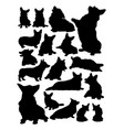 corgi dog animal silhouette vector image