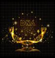 dna molecule half circle golden structure vector image vector image
