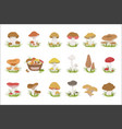 eatable mushrooms realistic drawings set vector image