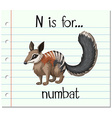 Flashcard letter N is for numbat vector image