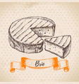 hand drawn sketch brie cheese background vector image