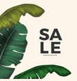 sale tropical summer poster with jungle leaves vector image vector image