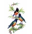 Watercolor wild exotic birds on flowers vector image vector image