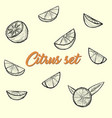 citrus set sketch by hand vector image