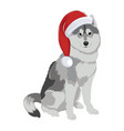 husky with christmas hat isolated on white vector image vector image