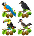 different types of birds on kiwi branch vector image vector image