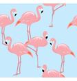 flamingos two b vector image
