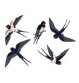 flying swallows set vector image