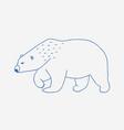 walking or wandering polar bear hand drawn with vector image