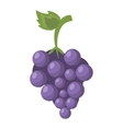 cartoon fresh grape fruit icon vector image