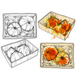 hand drawn pumpkin in paper box watercolor drops vector image